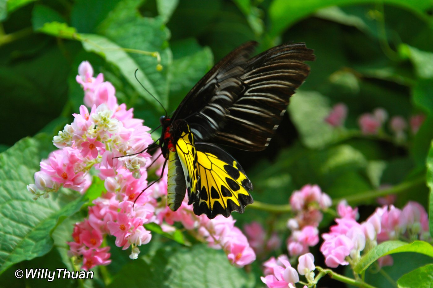 Phuket Butterfly Farm
