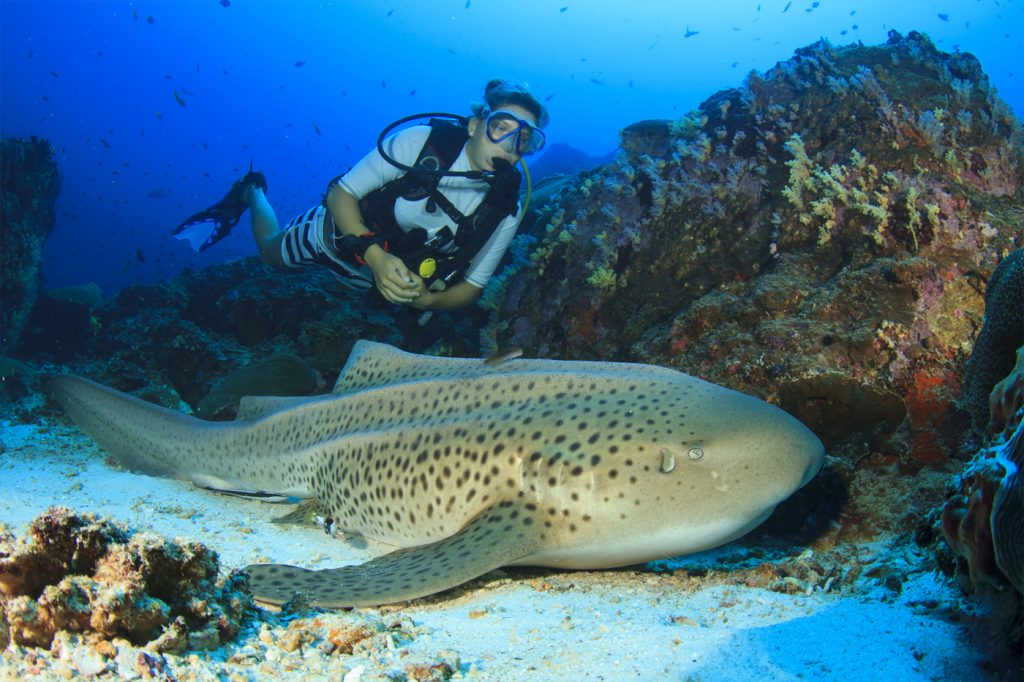 Diving Daytrips from Phuket