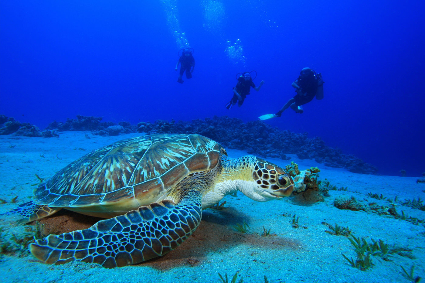 Learn More About Diving In Phuket