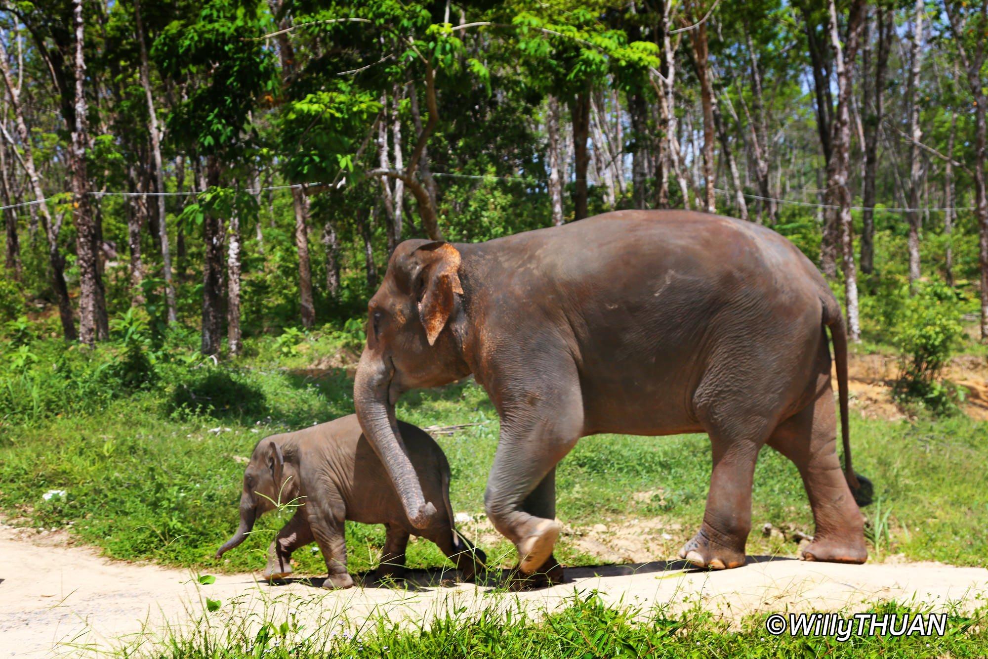 Elephant Trekking and Elephant Sanctuaries in Phuket