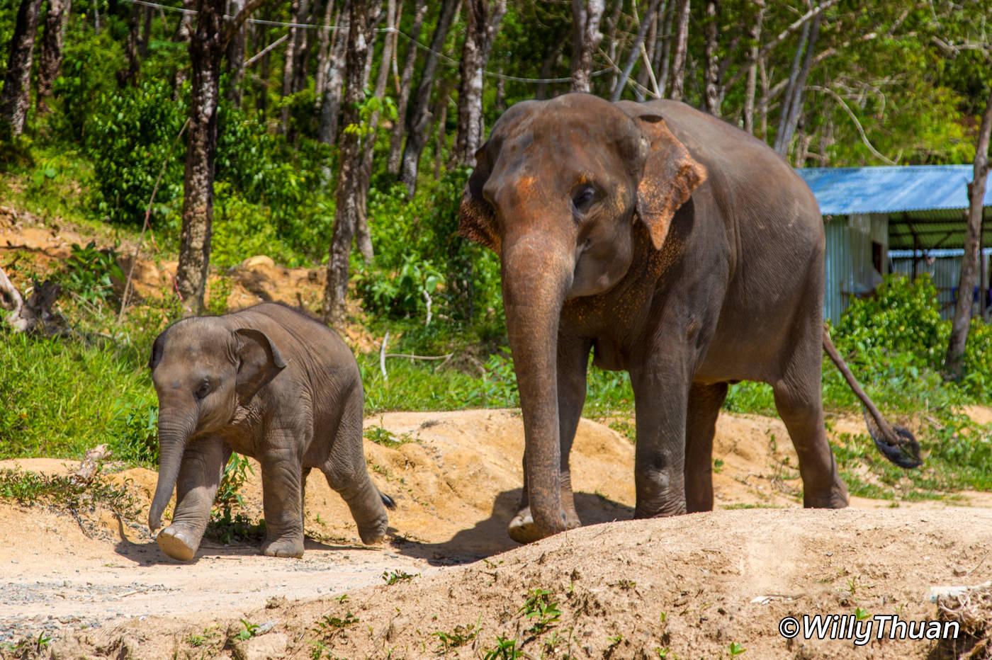 Elephant Jungle Sanctuary Phuket – Where to play with elephants in Phuket