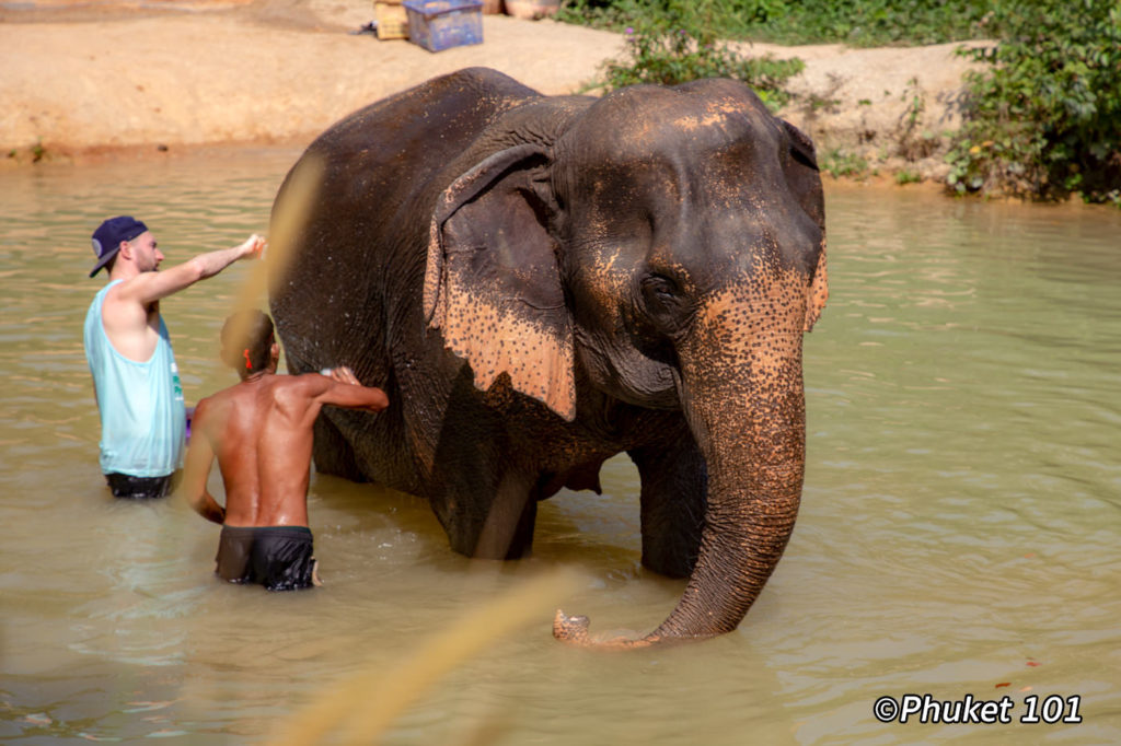 Phuket Elephant Retirement Park