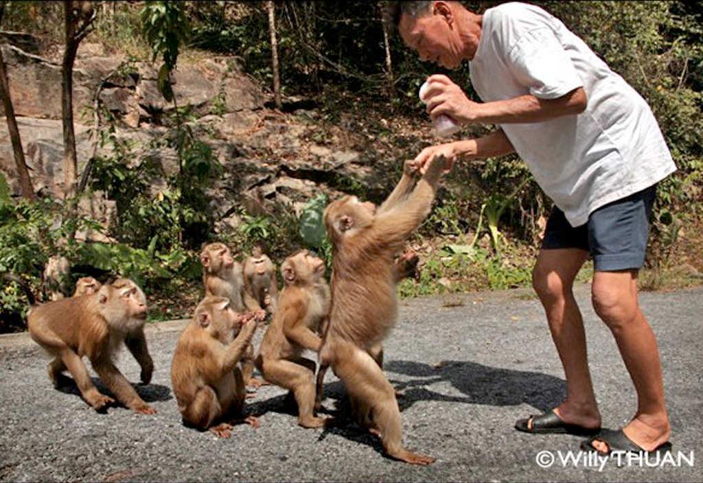 Monkey Hill Phuket