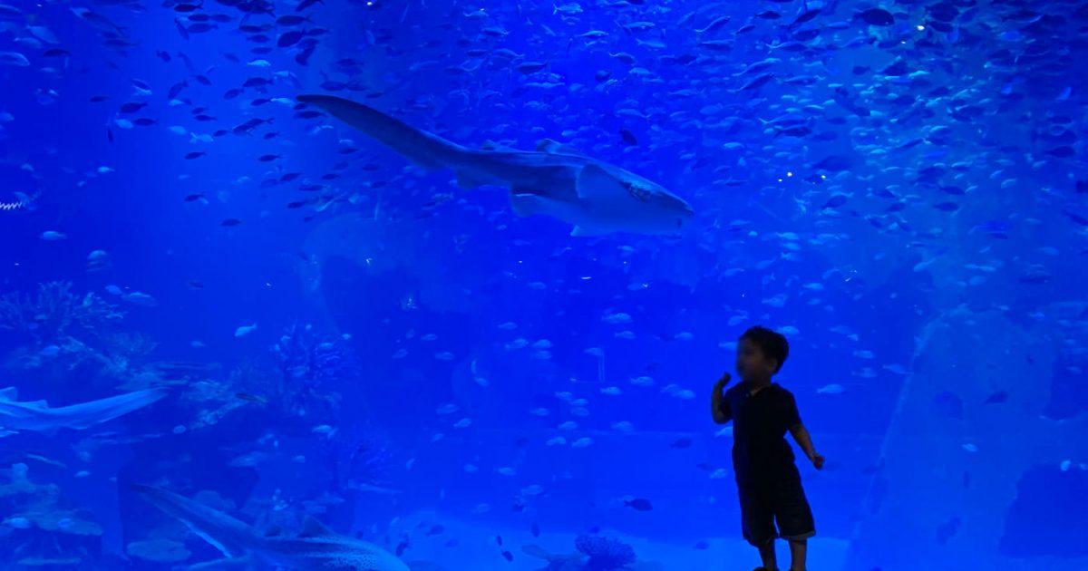 Phuket Aquaria at Central Floresta