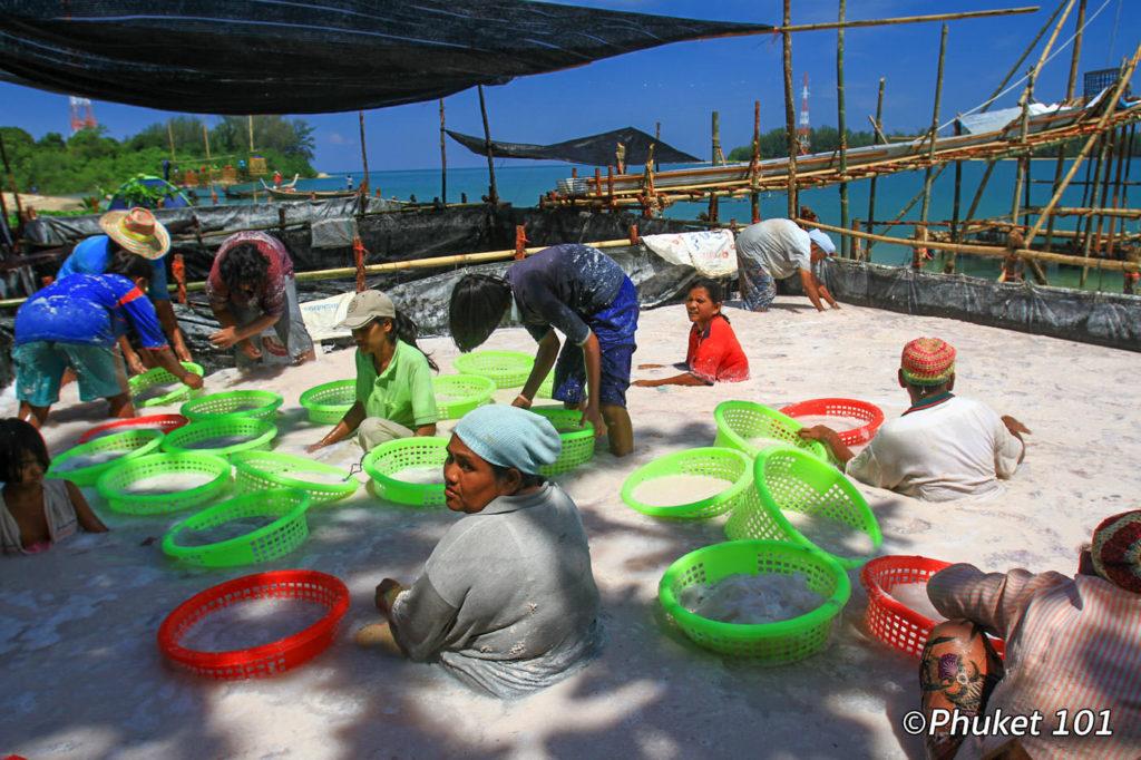 Jelly fish bath on Haad Pak Phra Beach