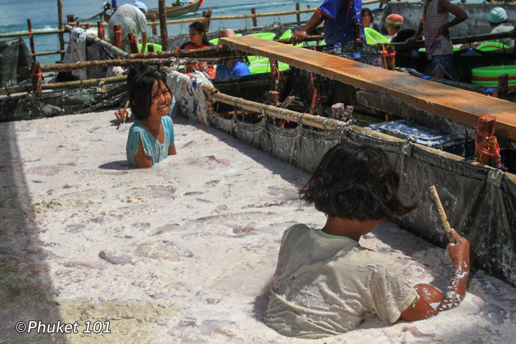 Jellyfish market preparation in Phuket
