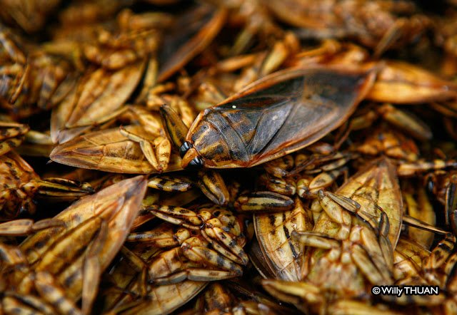 Eating Bugs and Insects in Phuket