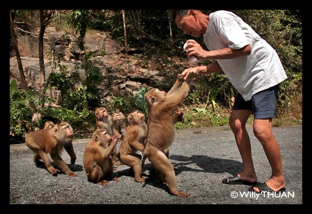 Monkey Hill in Phuket Town