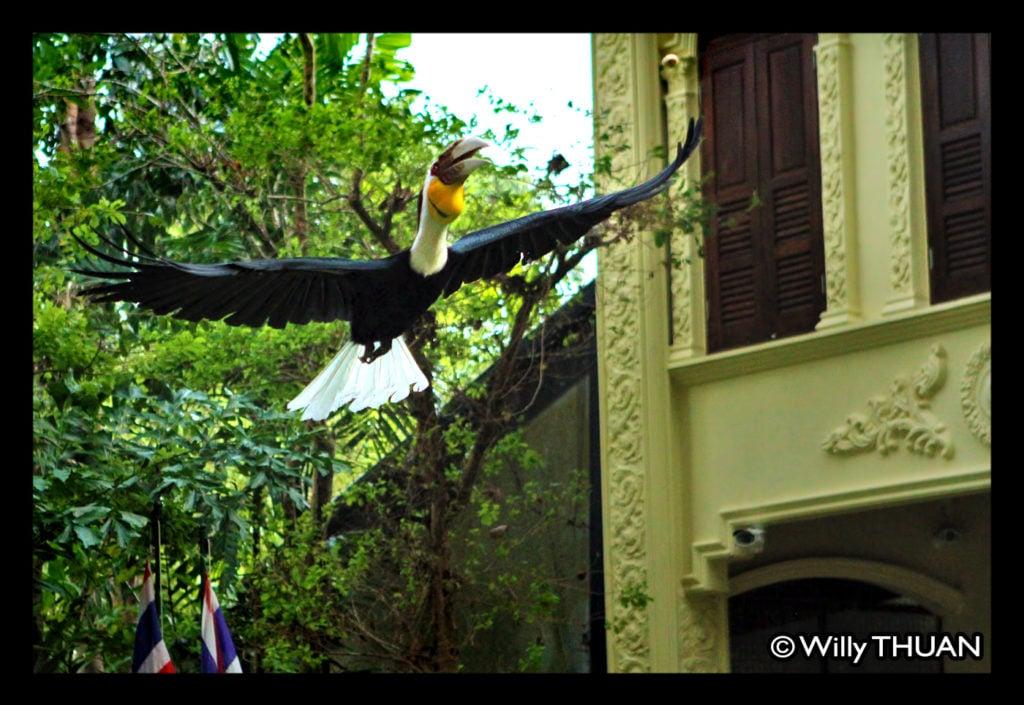 phuket-bird-park-4