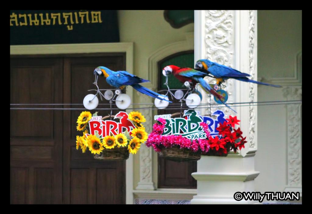 phuket-bird-park-parrots