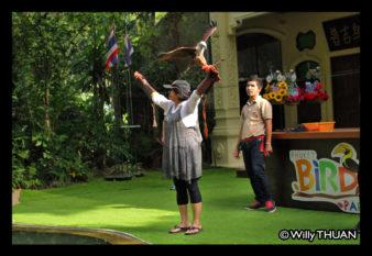 phuket-bird-park-show