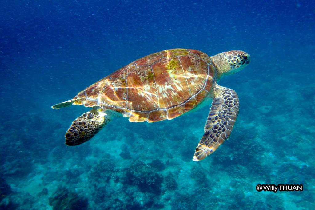 phuket-snorkeling
