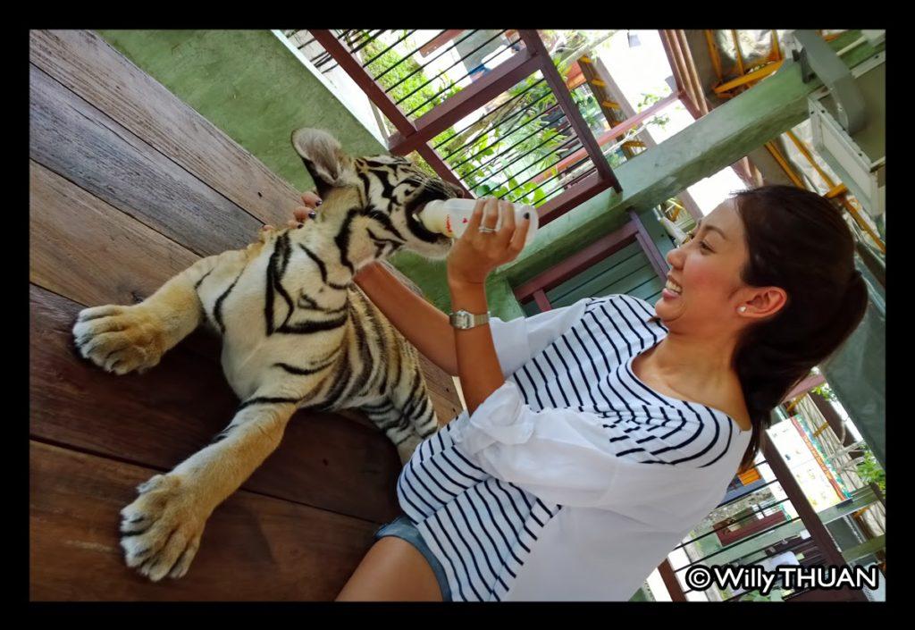 Phuket Tiger Kingdom in Kathu